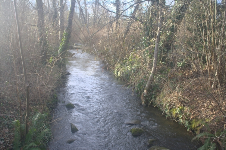 Thornton Creek