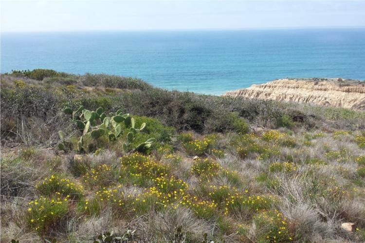 Torrey Pines Landscape 1