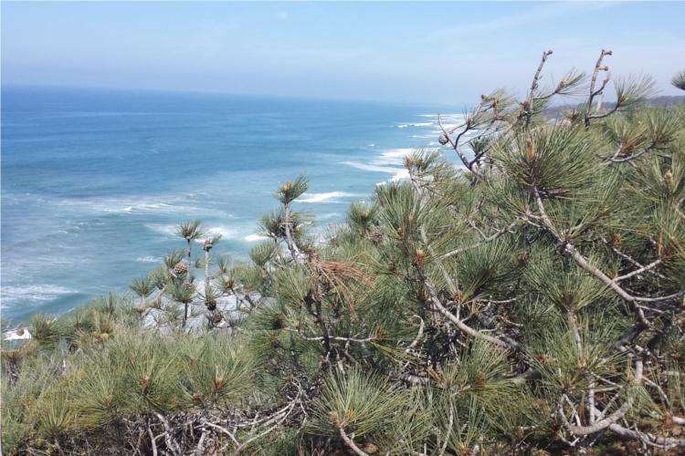 Torrey Pines Landscape 2